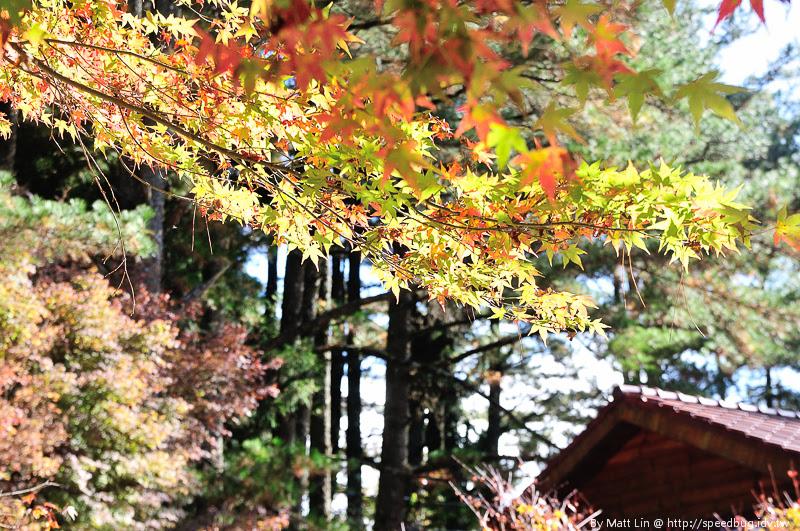 福壽山農場楓紅-36