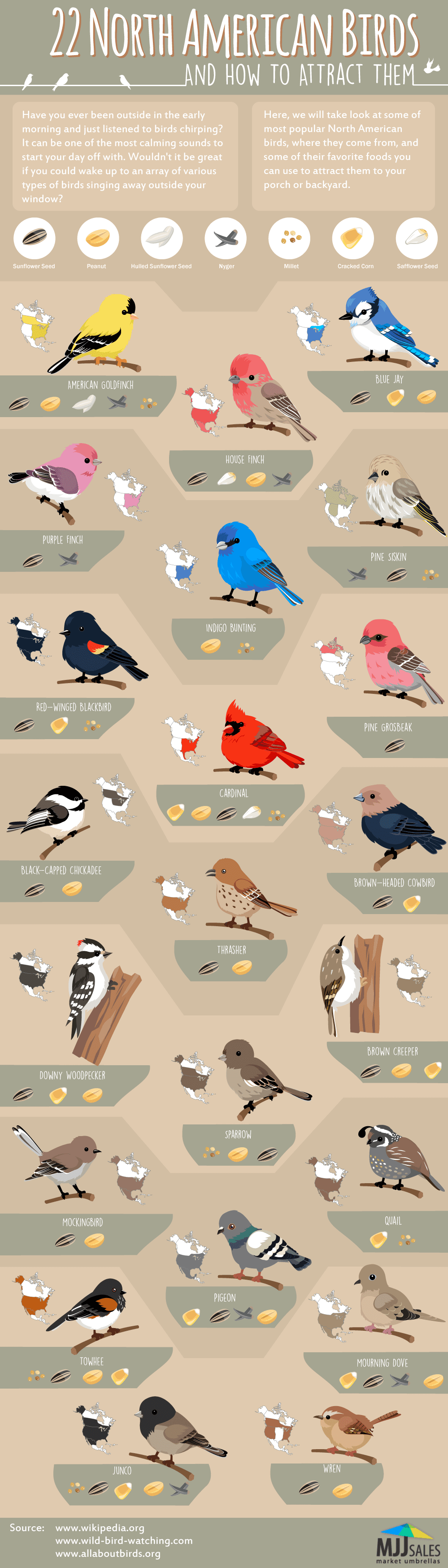 22 Popular North American Birds