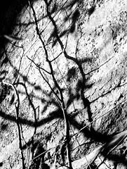 ombres sur un mur