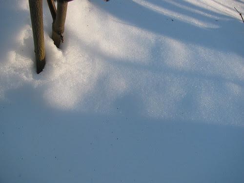 Snow Shadows 4