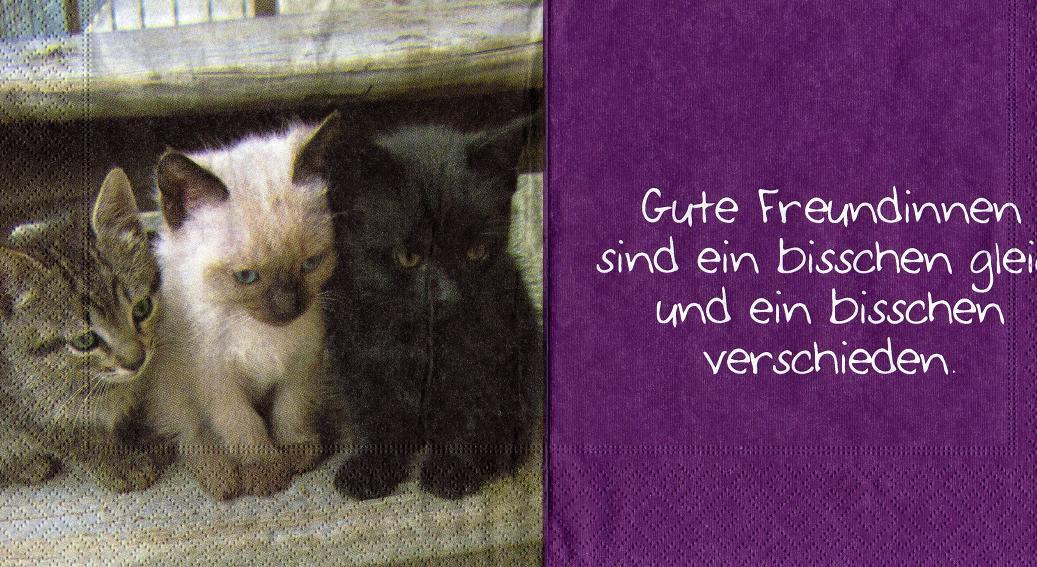 Katzen Freundinnen Sonjas Servietten Shop