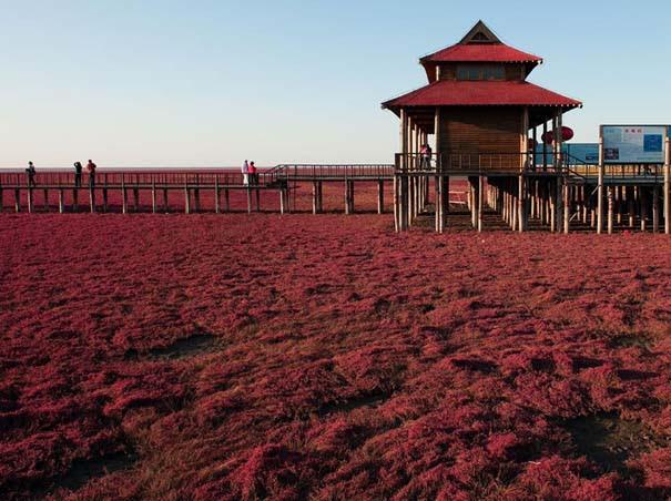 Η εκπληκτική Κόκκινη Παραλία στο Panjin της Κίνας (5)