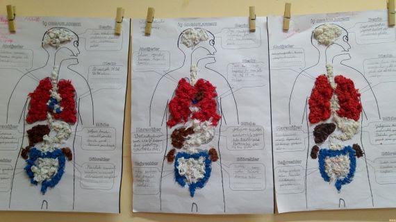 Iç Organlarımız Modeli Nasıl Yapılır