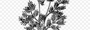 Sketsa Pensil Pohon Pisang