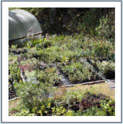 Garden Cottage Nursery