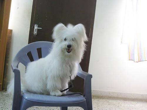 Maya before hair cut