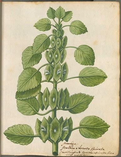 Hortulus Monheimensis 00147