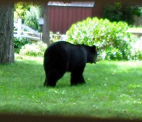 Mom Walking Thru our Yard
