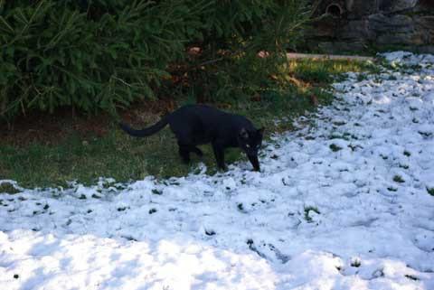 Dat snow iz cold on my piggy-pads.