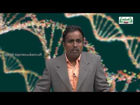 NEET Zoology Genetical Disorders Kalvi TV