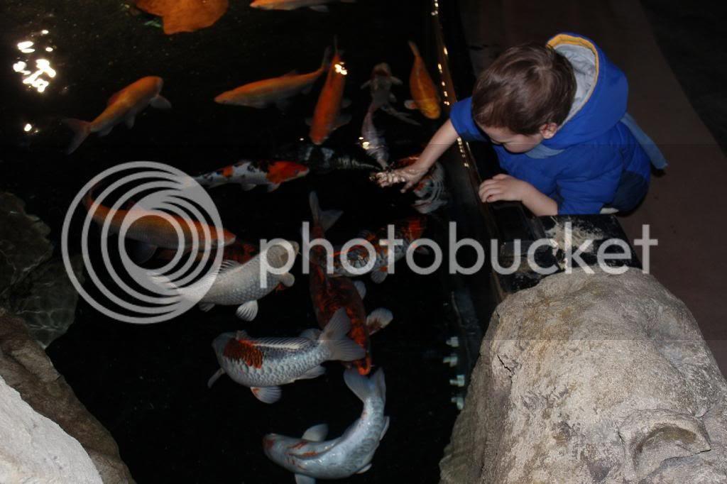 Petting Fish