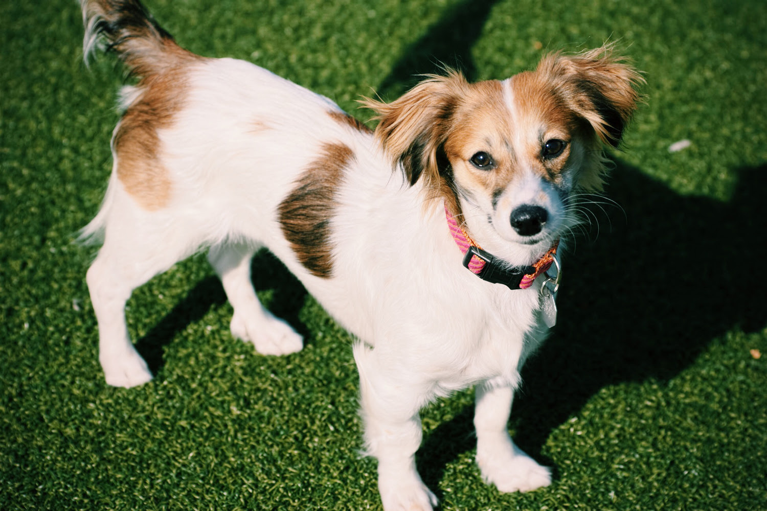 Cute Mixed Dog Breeds  www.pixshark.com  Images Galleries With A Bite!