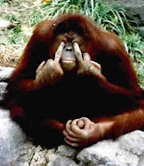 Aaron Shlechter the ape