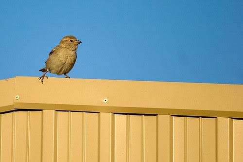 46.365_little_birdy