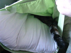Maggie inside the pillow case