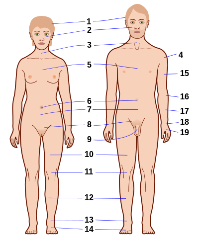Human body features-nb.svg
