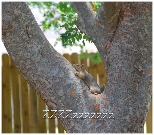 Sleepy-Squirrel