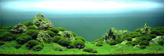 Aquascape Ideas Takashi Amano Aquascaping Techniques