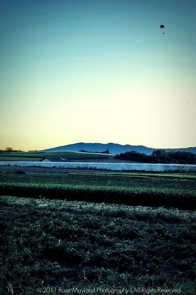 Dawn 1 4 bis