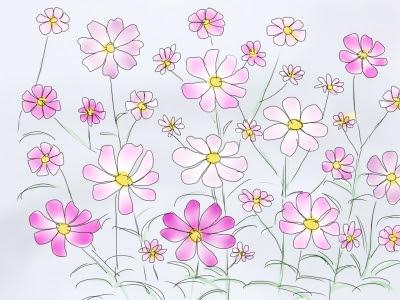 イラスト コスモス さぼてんの花ひっそりと咲く小さな花のように