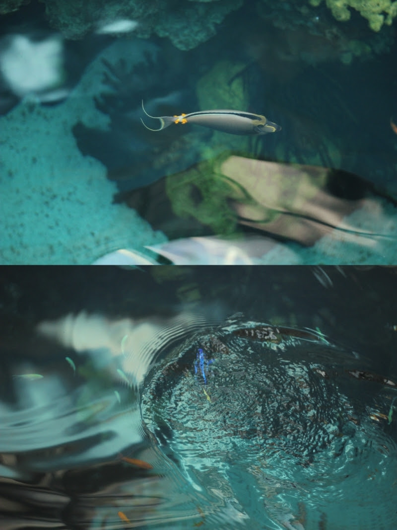 lisbon oceanarium 9