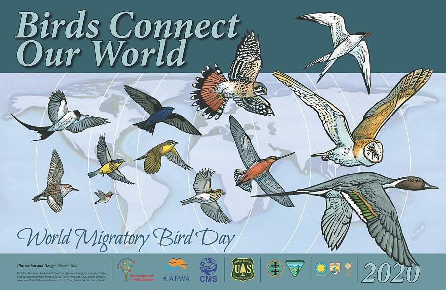 World Migratory Bird Day !!!WEEK!!! 2020