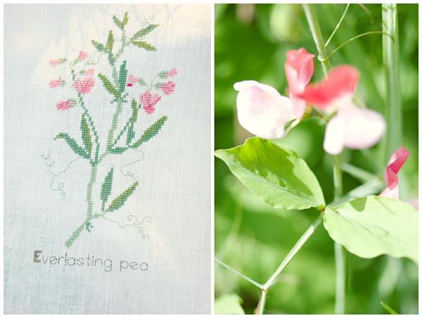 Everlasting Pea (Kazuko Aoki)