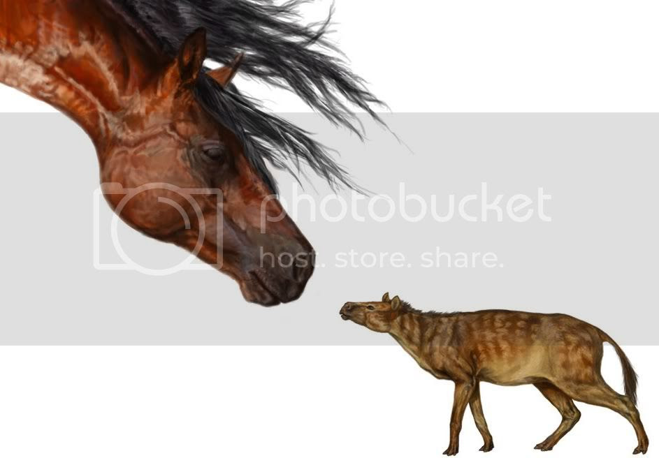Modern Morgan horse and Sirfhippus | Painting by Danielle Byerley