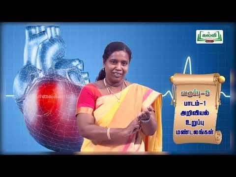 5th Science உறுப்பு மண்டலங்கள் பாடம் 1 Kalvi TV