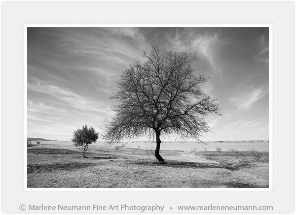 Black And White Fine Art Photography Marlene Neumann