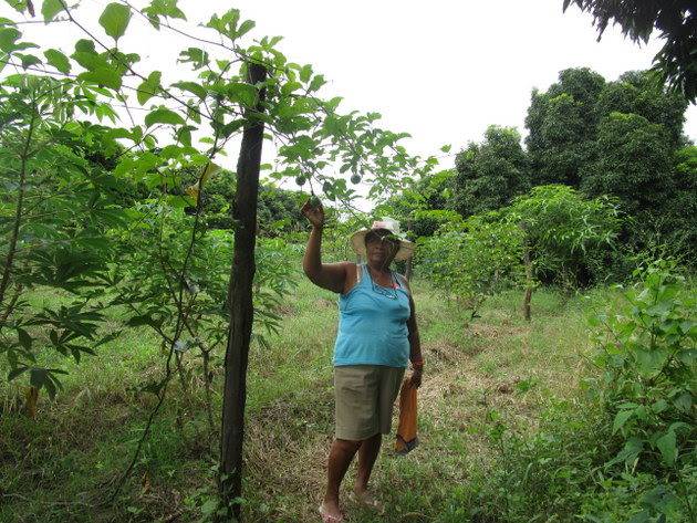Escolástica Juárez, 57, stands on her family farm where she grows organic fruits and vegetables in the village of Chapica, Morropón province, in the northern coastal department of Piura, Peru. She is involved in the effort to promote healthy eating at the local school. Credit: Courtesy of Sabina Córdova