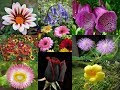 Name Of Flowers A To Z