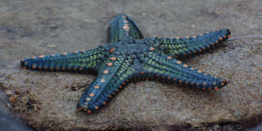 9 Cool Facts About Starfish