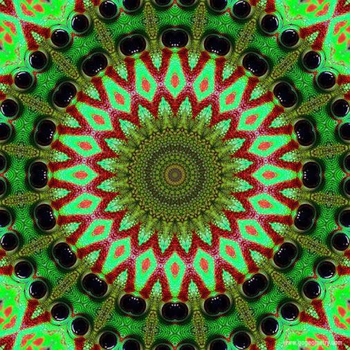 Geometric Art: Kaleidoscope of Gecko Patterns 2 using iPad Apps, Software.