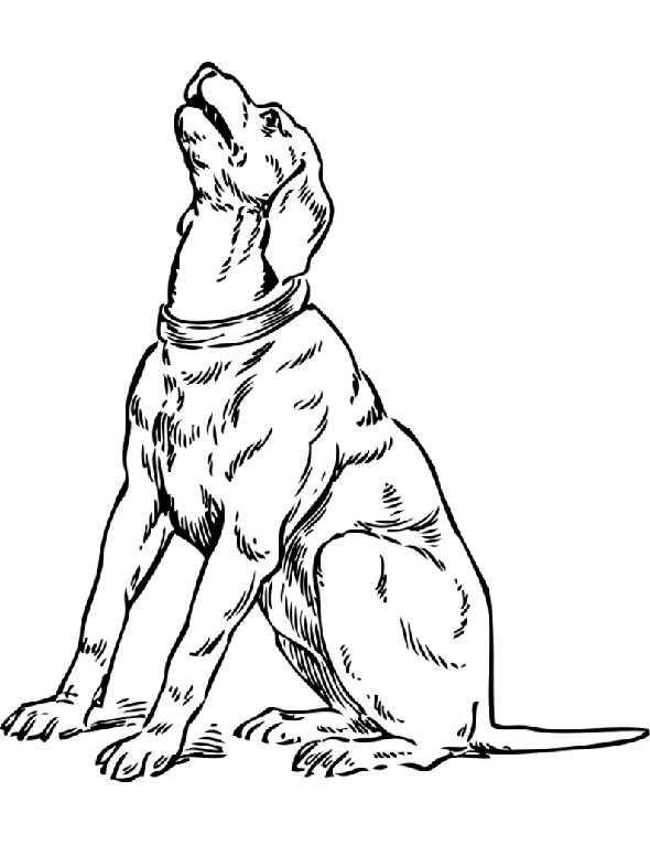 Ausmalbilder kostenlos Hunde 2 | Ausmalbilder Kostenlos