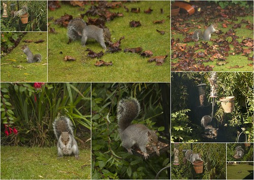 Squirrels at home