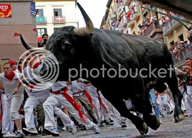 Bull Running in Pamplona