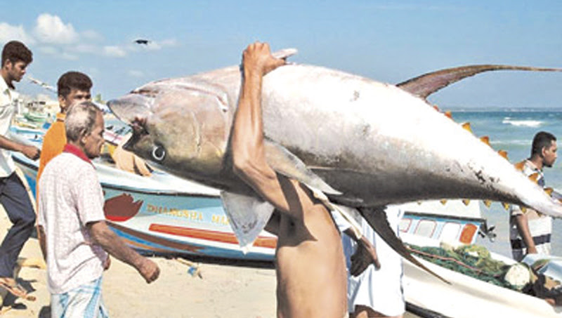 Fish exports to EU up by over 45%