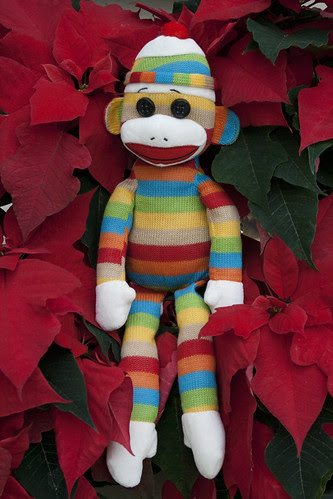 Poinsettia? Put a Sock [Monkey] in it by gina.blank