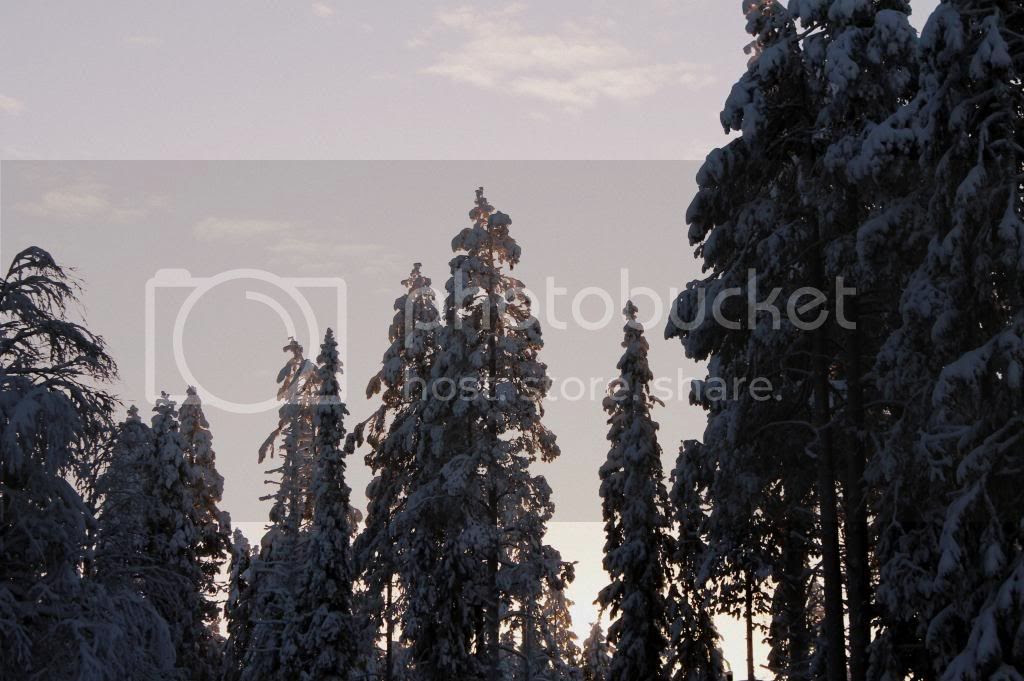 photo IMG_7991_zps41750d4c.jpg