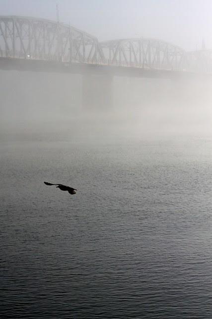 fog, hawthorne bridge