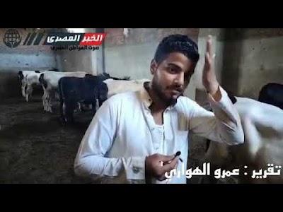 «الخبر المصري»في جولة تفقدية لأسعار الاضاحي وكيفيه شراء أضحية مناسبة