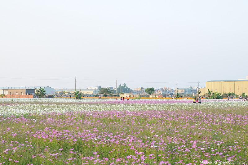 大寮花海 (25).jpg