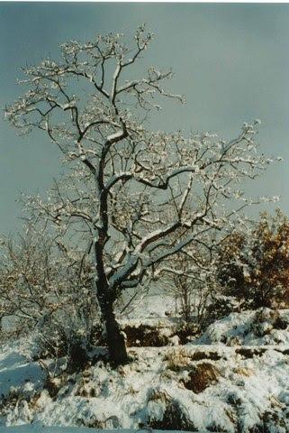 winterwlonetree
