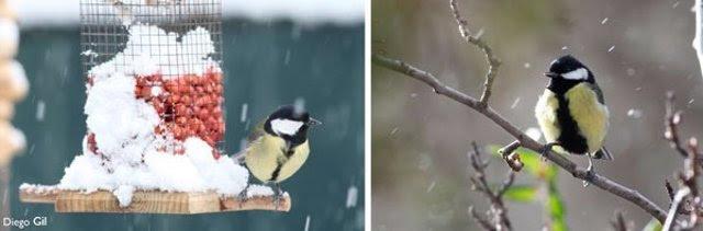 Las aves se alimentan menos cuando aumenta el ruido