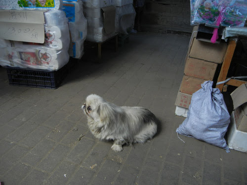Pet Dog in a Market in Shenyang, China _ 0444