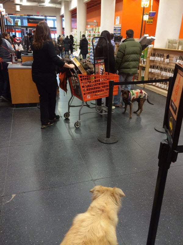 Are Dogs Allowed in Home Depot in NYC? Is it dog friendly? | NYC ...