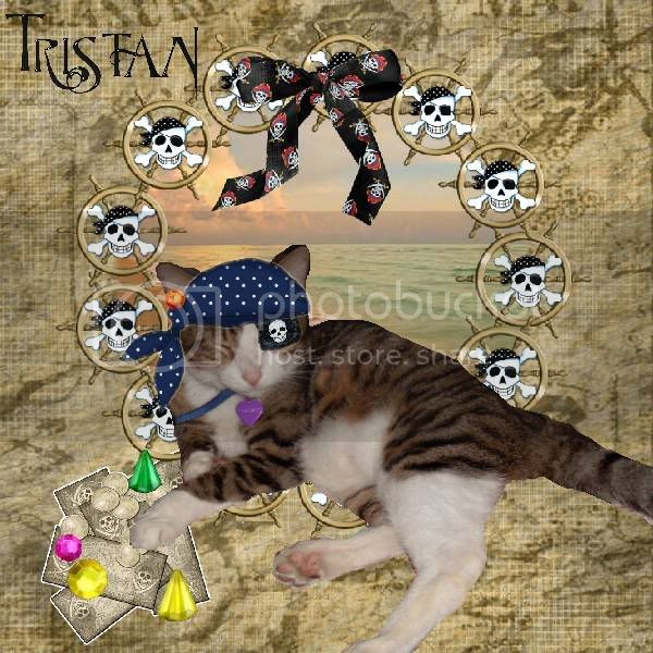 Pirate,Tabby Cat,Domestic Cat,Sir Tristan,Cats at the Beach