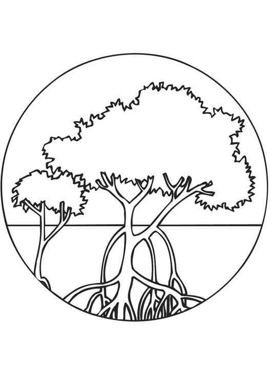 Orman Haftası Etkinlikleri 14 Okul öncesi Etkinlik Faliyetleri