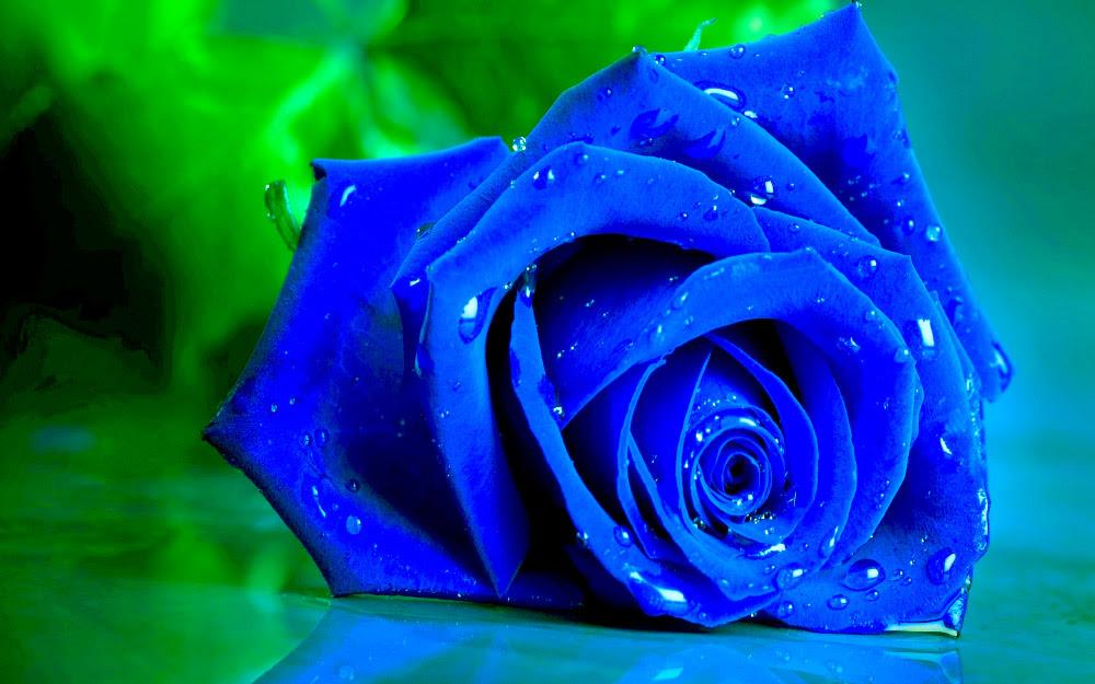 Rosas Azules Florpediacom